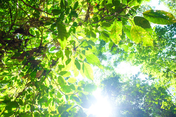 Green tree leaf wild forest with sun light background