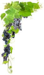 Wall Mural - Grappes de raisins sur fond blanc