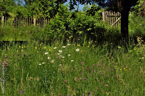 Verwilderter Garten Stock Photo And Royalty Free Images On Fotolia