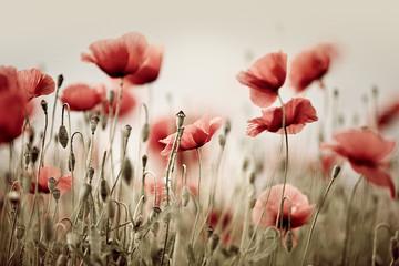 Fotobehang Poppy Poppy Dream