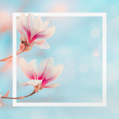 Wall Mural - White frame at spring nature background with magnolia blooming at blue sky with bokeh. Springtime layout. Magnolia tree blossom