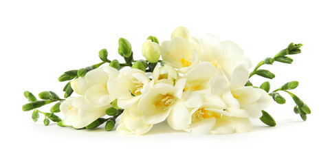 Bouquet of fresh freesia flowers isolated on white