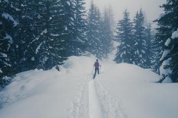 Valmalenco (IT) - Ciaspolata in neve fresca nella pineta