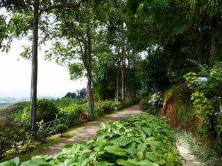 Plantation de café au Costa Rica