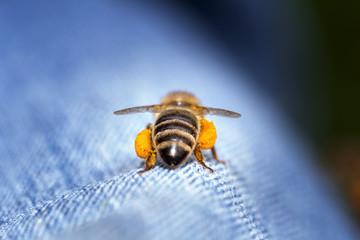 Honigbiene Schwertransport