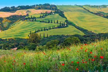 Obraz Piękna wijąca wiejska droga z cyprysami w Toskanii - fototapety do salonu