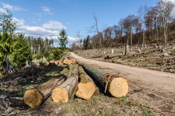 Waldschäden im Taunus - abgeholzte Bäume