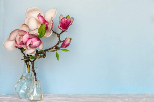 still life with beautiful spring magnolia flowers in vase on blue background. nature concept
