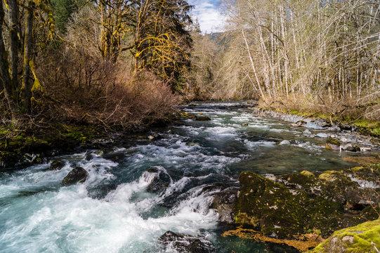 A shady spot on the Dosewallips River flowing on the Olympic Peninsula of Washington near Brinnon, Washington
