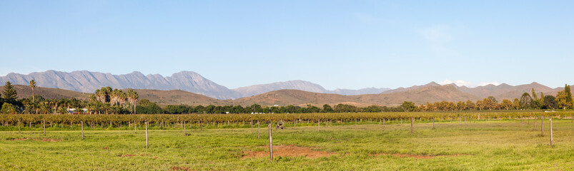 Panorama of the Robertson Wine Valley, Western Cape Winelands, South Africa with vineyards and Langeberg Mountains