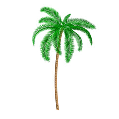 Isolated Palm tree.Vector Illustration