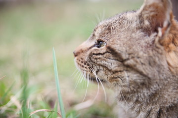 Tuinposter Lynx A domestic cat in blurred background.A pet in nature.The village.