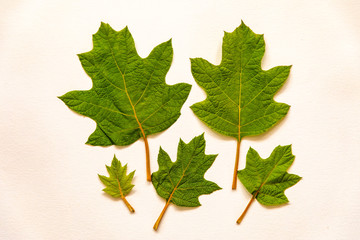 Assortment of Green Leaves on a Plain Background