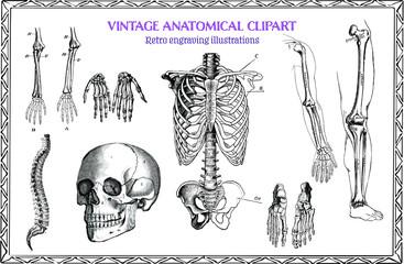 Engraving Set of Vintage Human Anatomy illustrations