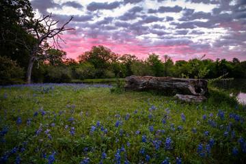 Texan Sunrise