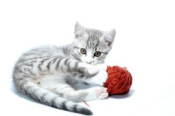 kleine Katze spielt mit Wolle