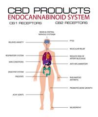 cbd products endocannabinoid system cb1 abd cb2 receptors.