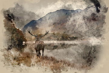 Watercolour painting of Stunning powerful red deer stag looks out across lake towards mountain landscape in Autumn scene