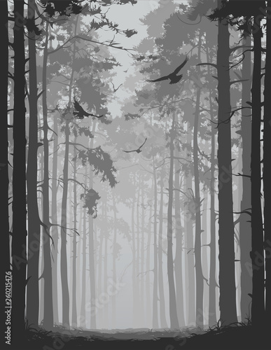Wall mural alley of pine forest with flying birds