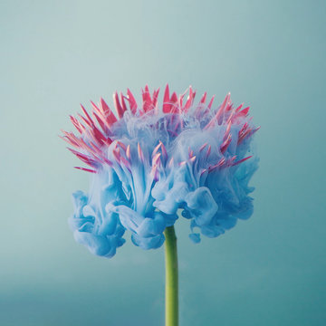 Pink daisy flower with pastel blue ink