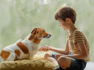 Cute dog gives the paw to the child.