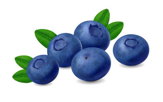 Blueberry isolated on white background. Realistic illustration
