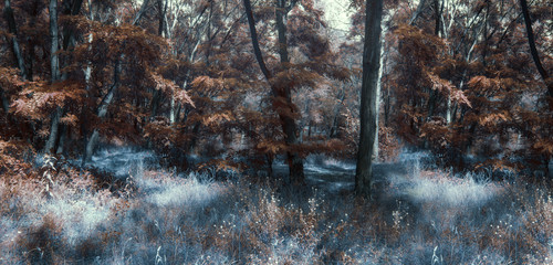 Wall Mural - Fantasy autumn panoramic photo with mysterious forest
