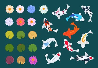 Koi fish and lotus. Japanese carp, flowers and leaves of water lilies. China asian traditional vector set. Illustration of colored carp fish and flower