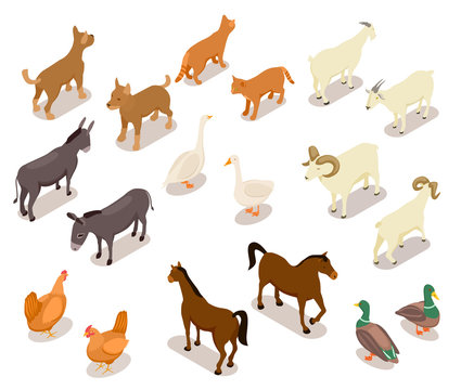 Farm animals isometric. Horse and dog, cat and goose, chicken and goat, ram and duck, donkey. Domestic animals vector 3d set isolated. Illustration of isometric animal farm, sheep and goat