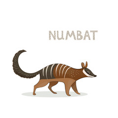 Vector illustration, a cartoon cute numbat, isolated on a white background. Animal alphabet.