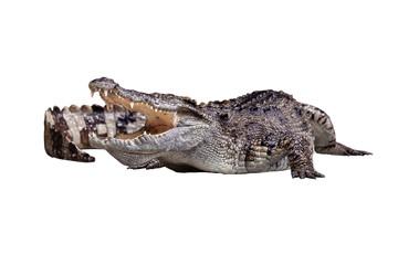 Poster Crocodile An open mount crocodile crawling