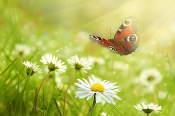 Schmetterling 534