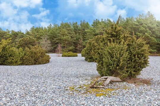 Feuersteinfelder auf der Insel Rügen