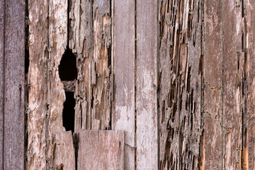 full frame image of a damage wooden house wall because of a termites problem. concept of nature, pests and wood background