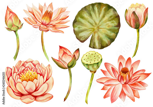 Illustration Of Watercolor Hand Drawn Set Of Pink Lotus Flower And
