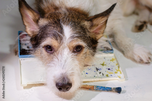 sad dog artist with paints and a brush, dog is drawing