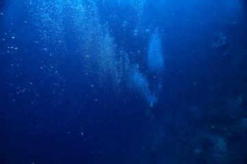 underwater world / blue sea wilderness, world ocean, amazing underwater