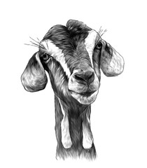goat head girl with dangles on the bottom of the muzzle, sketch vector graphics monochrome illustration on white background