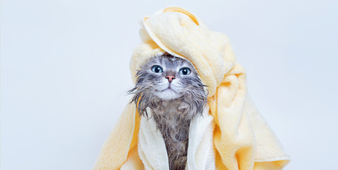 Funny smiling wet gray tabby cute kitten after bath wrapped in yellow towel with blue eyes. Pets and lifestyle concept. Just washed lovely fluffy cat with towel around his head on grey background. Fototapete