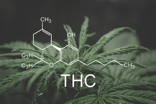 THC formula, Tetrahydrocannabinol . cannabinoids and health, medical marijuana, Hemp industry, despancery business. CBD and THC elements in Cannabis, Growing Marijuana,