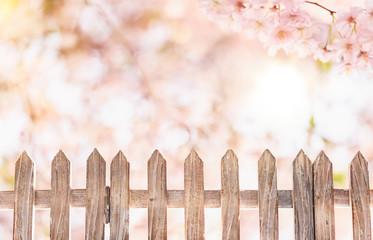 zaun hintergrund frühling kirschblüte