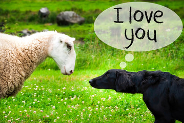 Dog Meets Sheep, Text I Love You