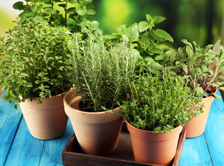 Homegrown and aromatic herbs in old clay pots on rustic background