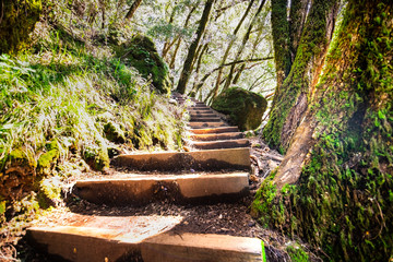 Fototapeta Wooden steps going up through a green forest in Marin County, north San Francisco bay area, California obraz