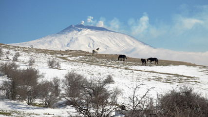 Wall Mural - Wild Horses In Winter Landscape