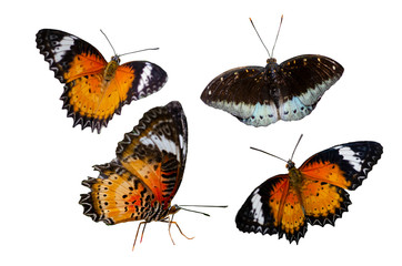 Wall Mural - Collection Butterfly spots orange yellow white background Isolate