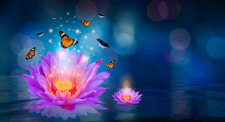 Wall Mural - Butterflies are flying around the purple lotus floating on the water Bokeh
