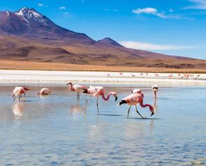 Foto auf AluDibond Flamingo Flamingos at Colorado lagoon