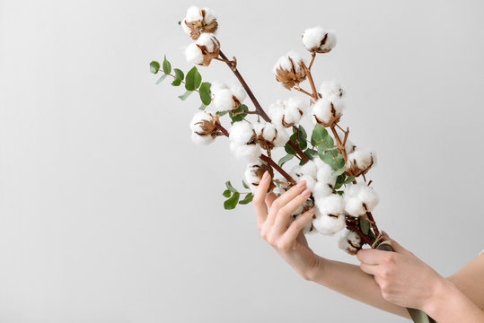 Female hands holding floral composition with cotton flowers on light background