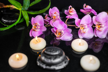 spa concept of purple orchid (phalaenopsis), candles, green leaves and black zen stones with drops on water with reflection